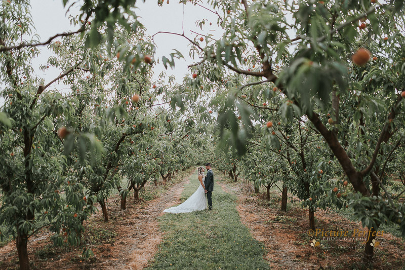 Palmerston North wedding photo Emma 0327