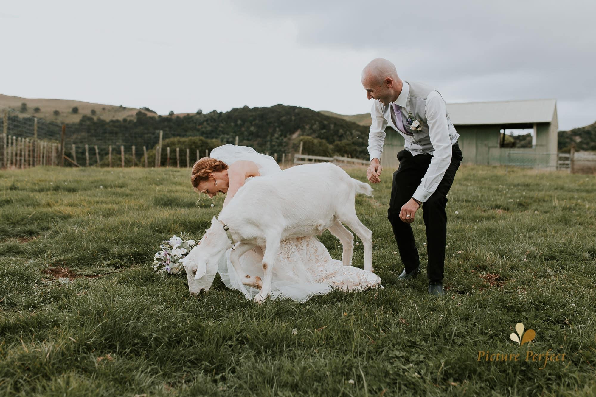 Freya and Matt fun wedding photography 0241